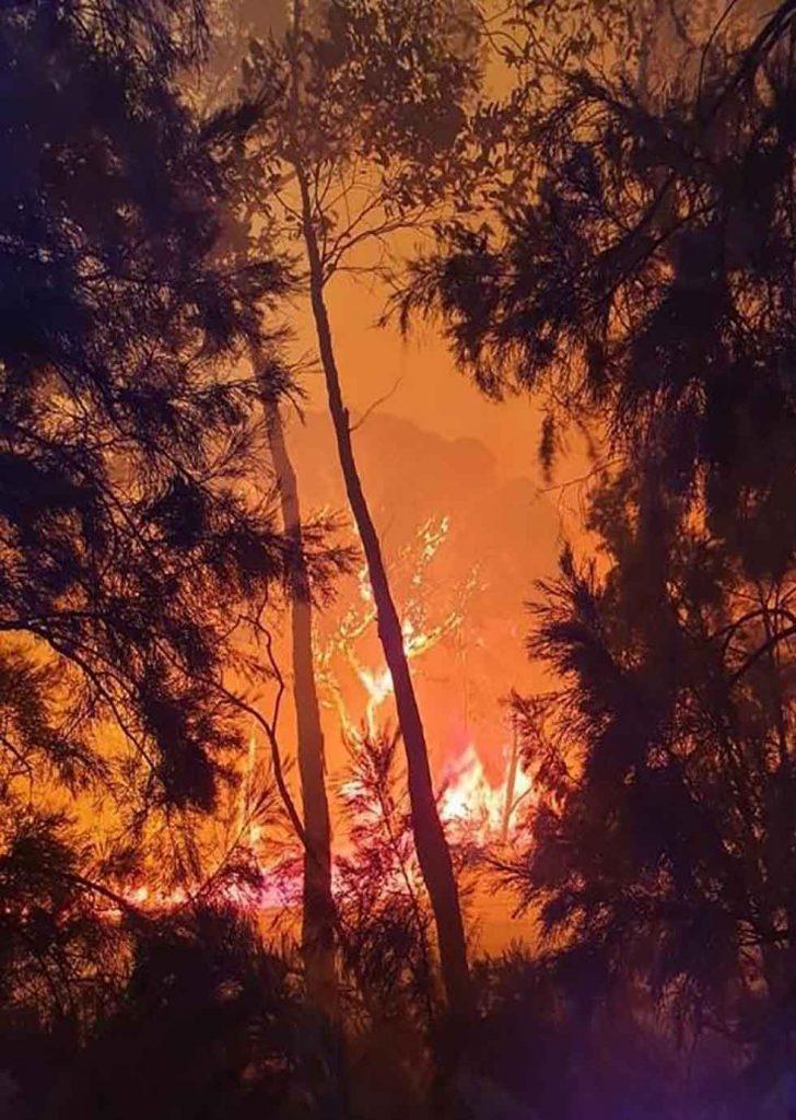 Adelaide Hills Bushfires